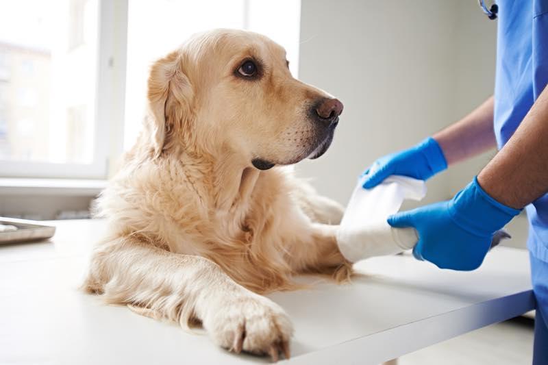 動物看護師_画像