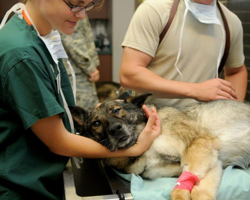 動物看護師 なるには